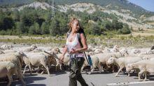 """""""Entre ovejas"""": Un pastor trashumante y famosos en el nuevo espacio de La 1"""
