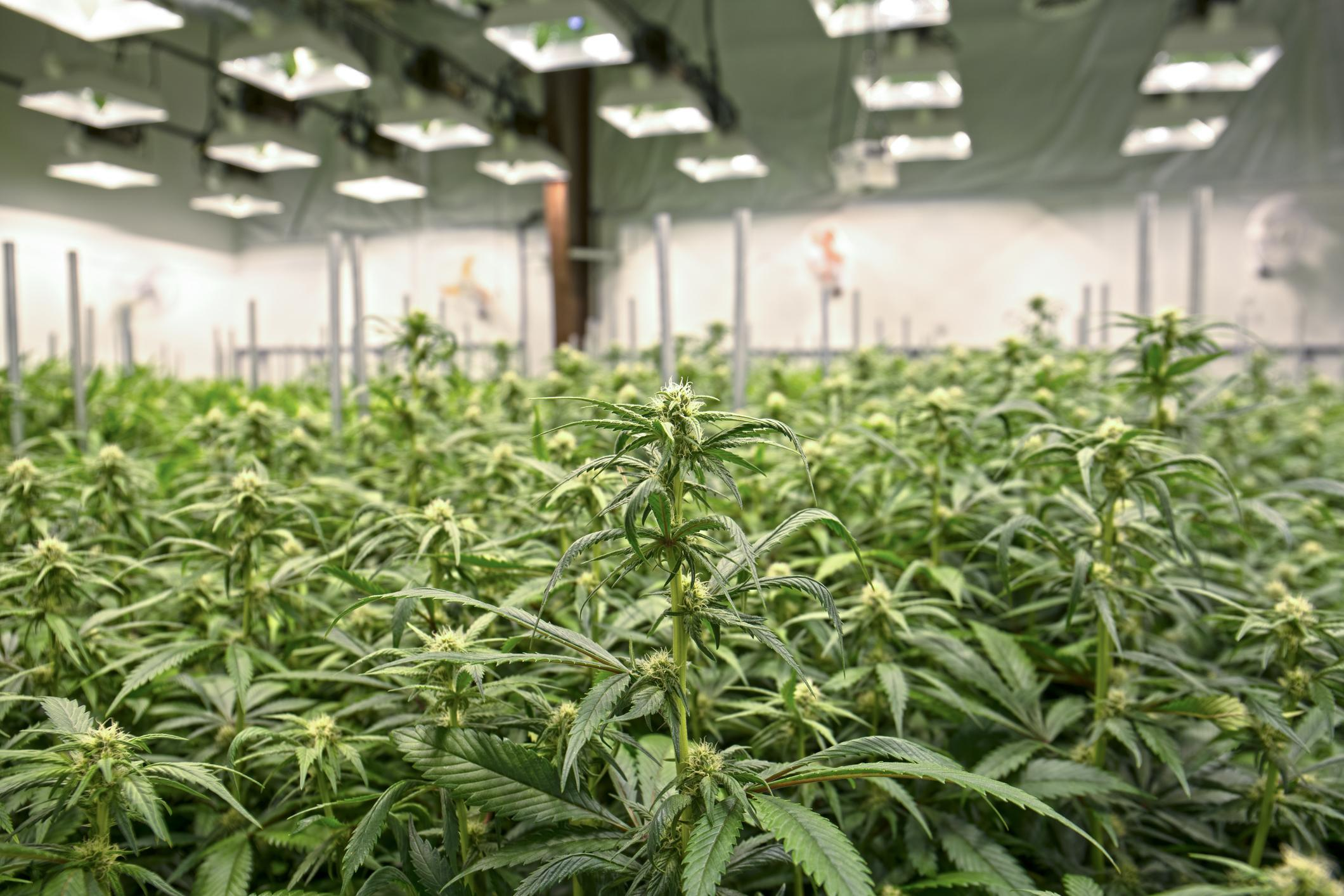Here's How Marijuana's Top Dividend Stock Expects to Pay ...