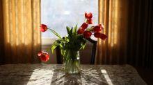 Tulips, peonies, lockdown … how flower power has kept my friendships blossoming