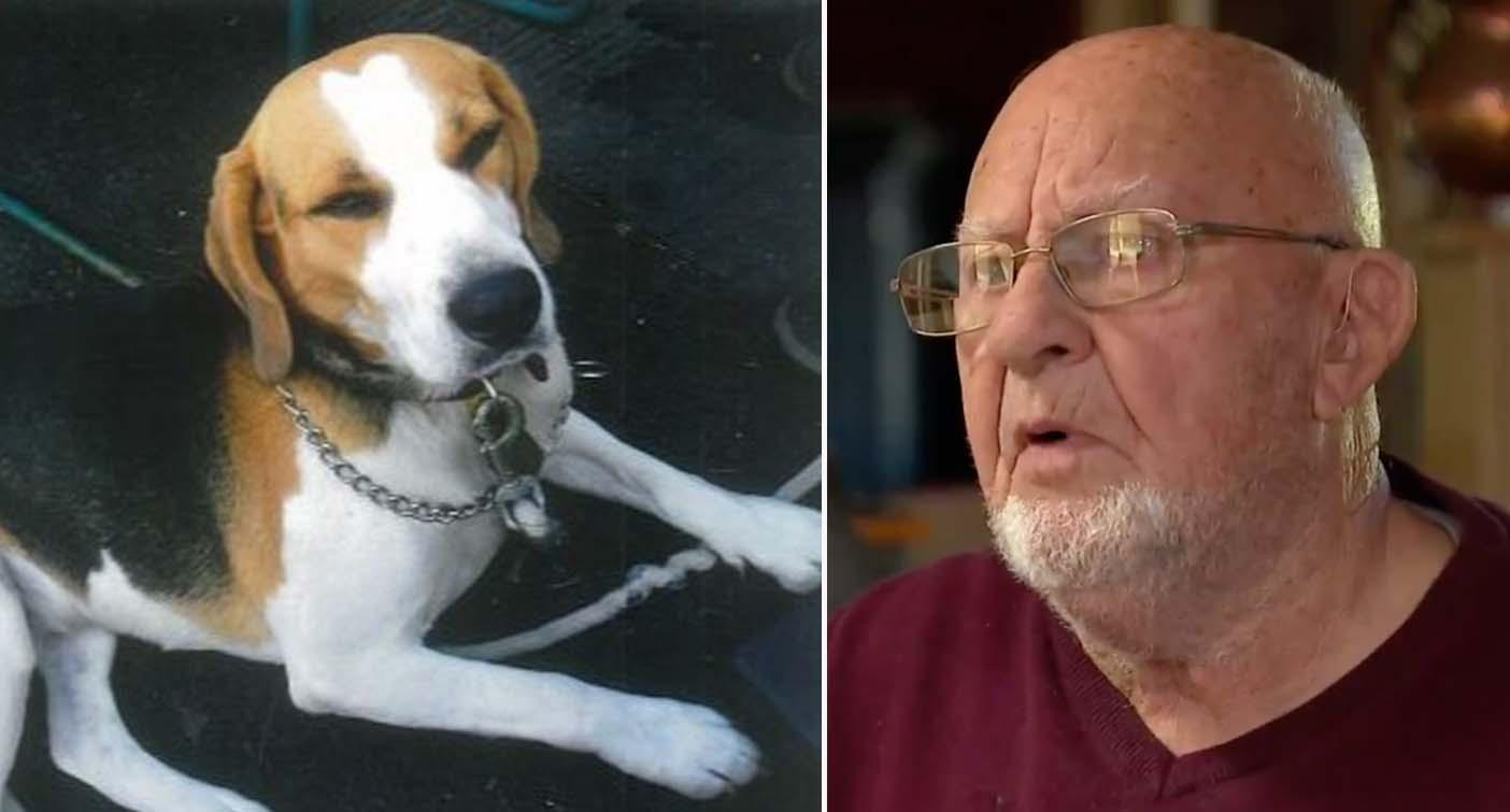 'I just went numb': Elderly man who had car stolen with dog inside pleads for her return