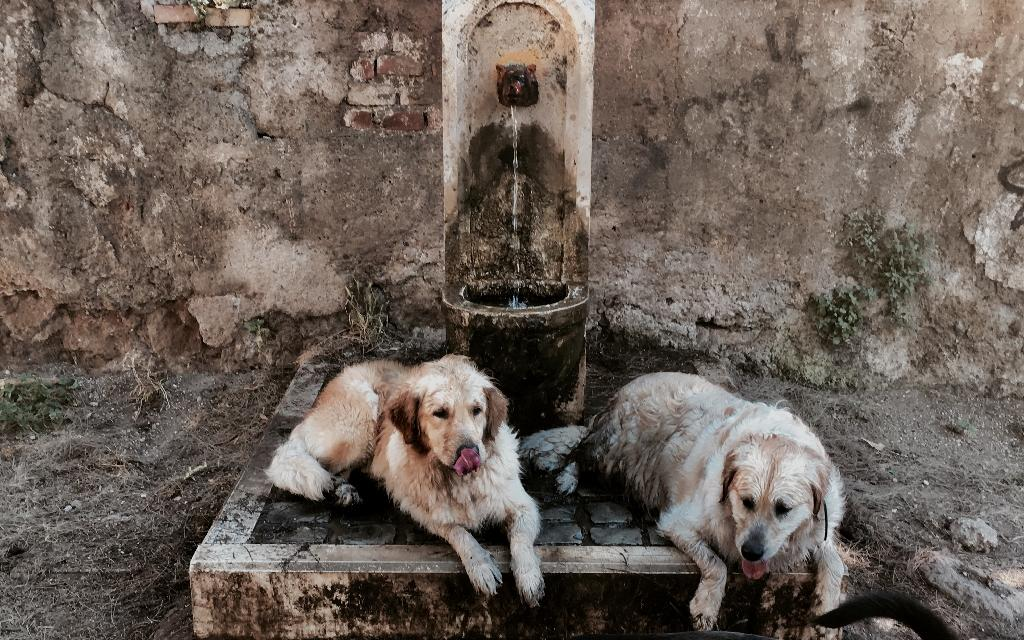 As the temperatures rose, everyone was looking for a way to cool down, with these two dogs finding respite in a Rome fountain (AFP Photo/Tiziana FABI)