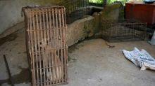 Cambodia's tourist hotspot bans dog meat trade