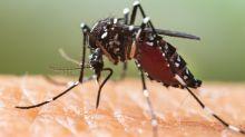 Quels sont les symptômes de la dengue et comment se transmet-elle ?