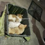 """""""Mystery boxes"""" in China found with suffocating puppies, kittens"""