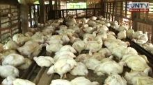 Broiler and egg producers urge import ban on poultry products