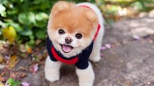 Boo, the famously cute dog, has died 'of a broken heart'