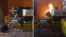 Curious dog accidentally sets his home on fire