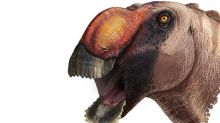 Texas fossil uncovers new species of duckbilled dinosaur