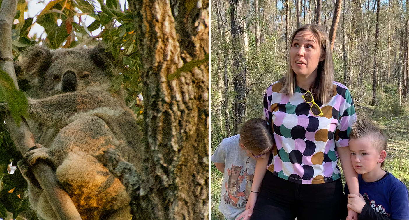 'My heart bleeds': Mum fights to save koalas as mine expansion looms – Yahoo News Australia