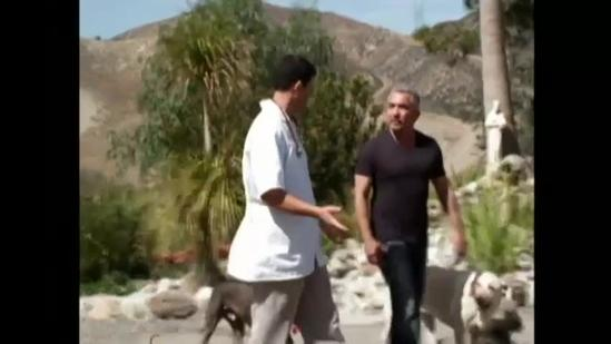 Cesar Millan teaches you the secrets to a well behaved pet