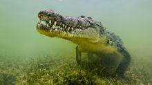 Man killed and eaten by crocodile while breaking coronavirus restrictions