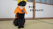 This Japanese cat has over 100 cosplay costumes made by its owner