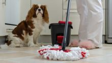 Five spring cleaning tips for pet parents