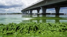 Wildlife-rich lagoon heavily polluted, threatened by building boom