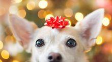 Para evitar el abandono, en Alemania no habrá adopciones de mascotas durante Navidad