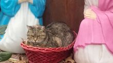 Cat curled up in neighborhood Nativity scene delights internet
