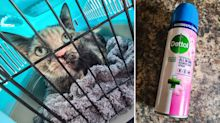 'Toxic-shock fit': Warning for pet owners over Dettol product