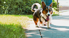 Warning for owners planning to take dogs for walks in summer