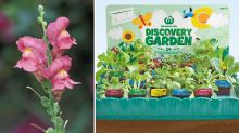 Woolworths denies 'toxic' Discovery Garden seedling claims