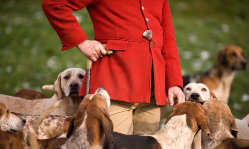Labour pledges to close loopholes used to hunt foxes, hares and deer