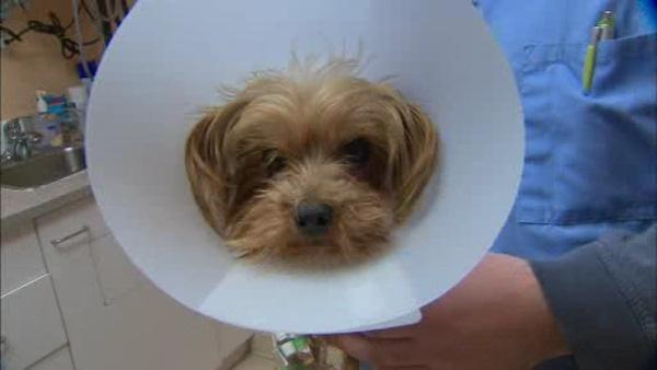 Yorkie reunited with family after missing for over a year