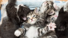What It's Like to Be a Professional Kitten Rescuer