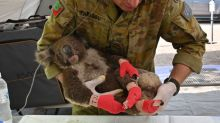Australia's Kangaroo Island is looking for volunteers to feed animals injured in bushfires