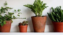 How to grow and care for indoor plants: tricks and tips to keep houseplants healthy