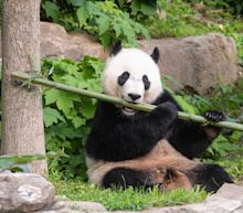 Here's how FedEx will fly giant panda Bei Bei to China via its 'Panda Express'