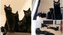 日本貓奴分享「5隻黑貓」生活照 勁似影分身