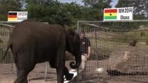 Elephant Predicts World Cup Matches