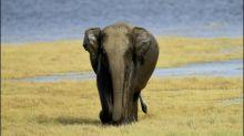 Wieder zwei Elefanten bei Zusammenstoß mit Zügen in Sri Lanka getötet