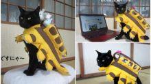 日本黑貓無奈變「貓巴士」 經常性cosplay仲有送貨員造型