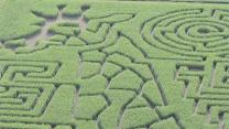 Virginia Maze Man Charts Corny Career