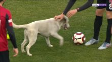 Uninvited guest hounds players in a Turkish soccer match