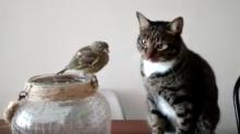 Lo que hace este gato frente a un pájaro se ha vuelto viral