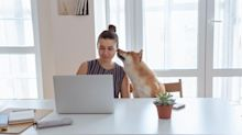Forget Dogecoin: These 3 Pet-Friendly Stocks Are Better Investments