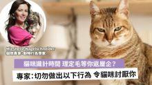 【貓奴必睇】貓都識等你返屋企?專家教路:如何令家貓愛上你