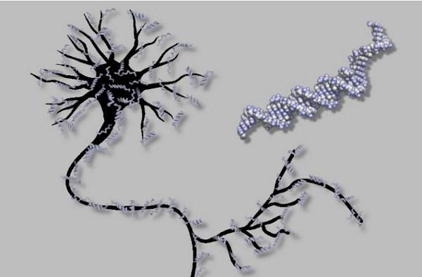DNA-based artificial neural network is a primitive brain in a test tube (video)