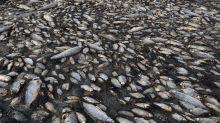 Los peces de agua dulce van camino de la extinción