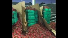 Tons of pot found in truck full of jalapeno peppers in California, Border Patrol says