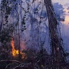 The Amazon Rainforest in Brazil Is Burning, and You Can See the Damage From Space