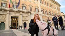 Brambilla porta un maiale a Montecitorio