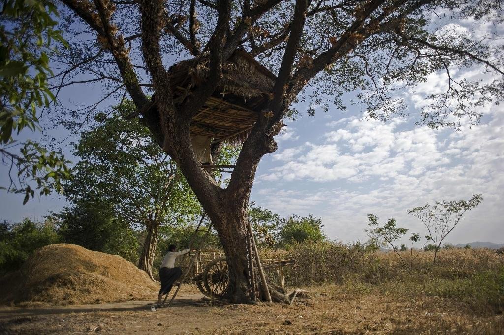 A man climbs up to a tree house in Taik Kyi village on the outskirts of Yangon on January 14, 2016 (AFP Photo/Ye Aung Thu)