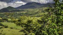 Descubren potente antibiótico en una selva tropical de México