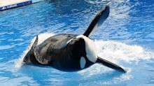 SeaWorld to pay $5 million to settle fraud claim after exposé documentary 'Blackfish'
