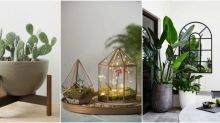 These are the most popular houseplants on Pinterest
