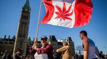 Cannabis companies react to recreational marijuana legalization