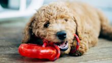 Your pup asked us to tell you: Chewy is having a flash sale on toys for pooches and kitties