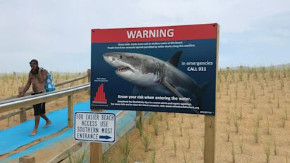 Sharks multiply off Cape Cod beaches